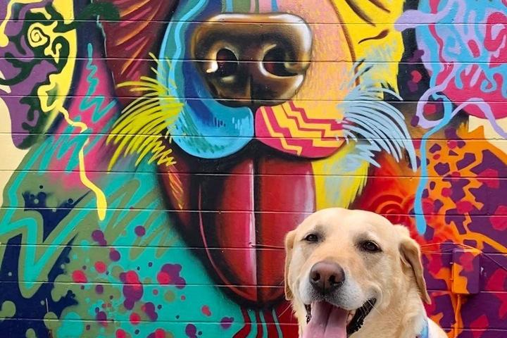 Yellow Lab posing in front of wall mural in Oviedo, Fl.