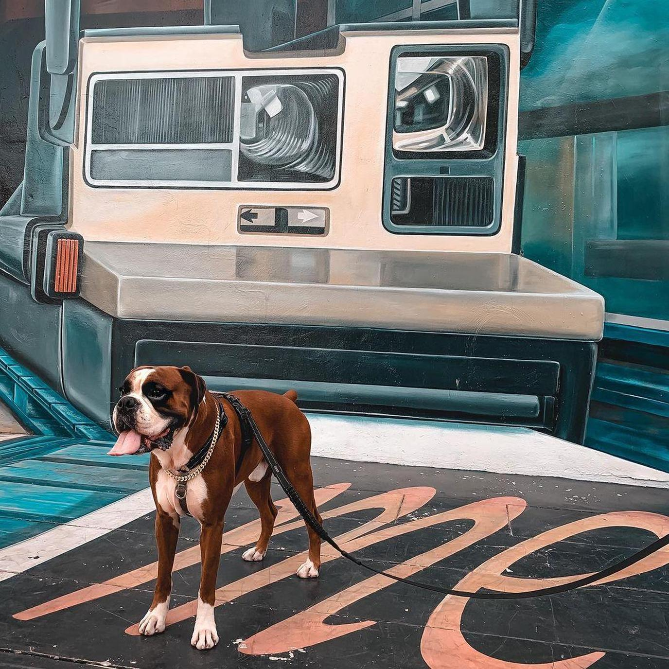 Visit Wynwood Walls to see famous murals with youru dog.