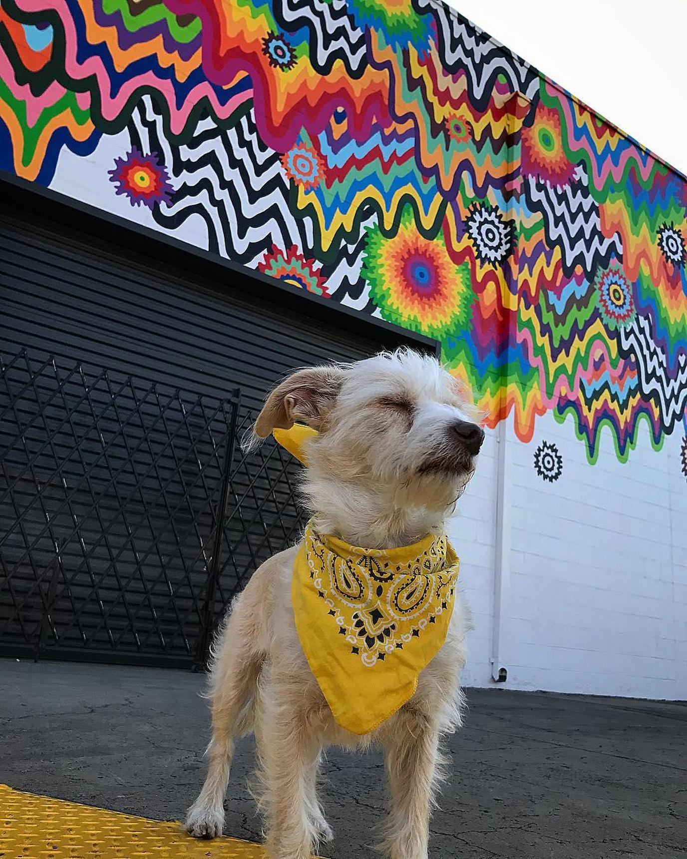 Dog poses in front of Chromatic Cascade Mural in Los Angeles.