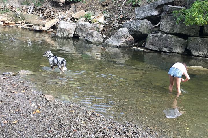Pet Friendly Etobicoke Valley Dog Park