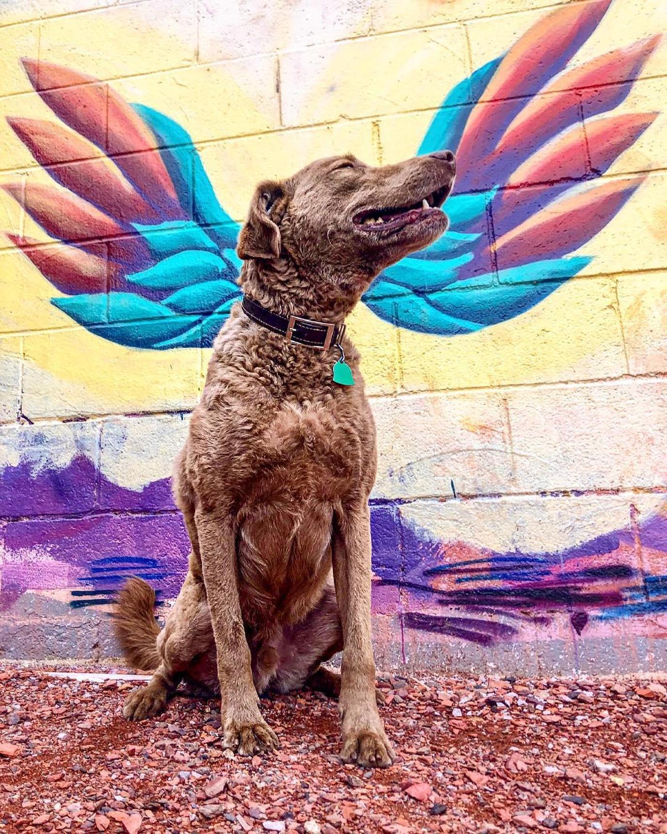 Dog poses with wall mural in Birmingham at pet-friendly restaurant, MELT.