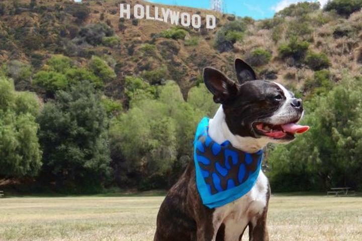 Dog friendly movie locations include the famous Hollywood Sign.