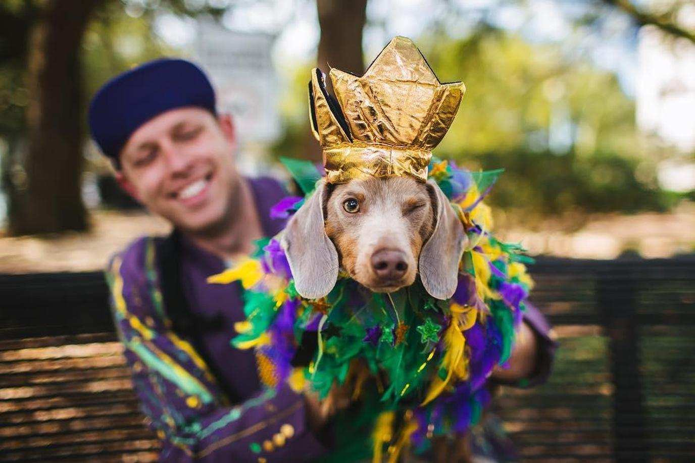 A Costumed Dog Welcomes You to Pet-Friendly New Orleans