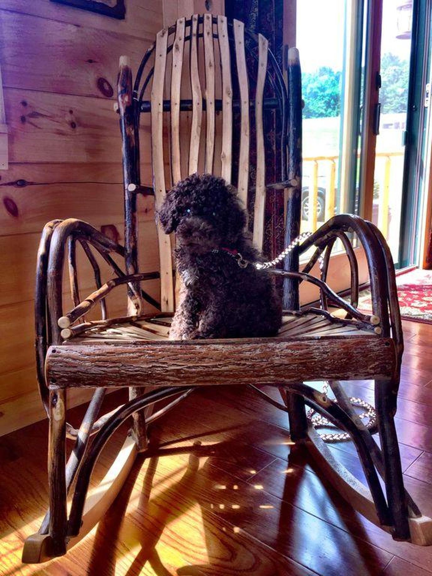 a dog at Luxury New Log Cabin