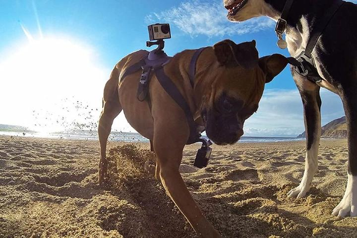 The Best Pet Gadgets for 2021