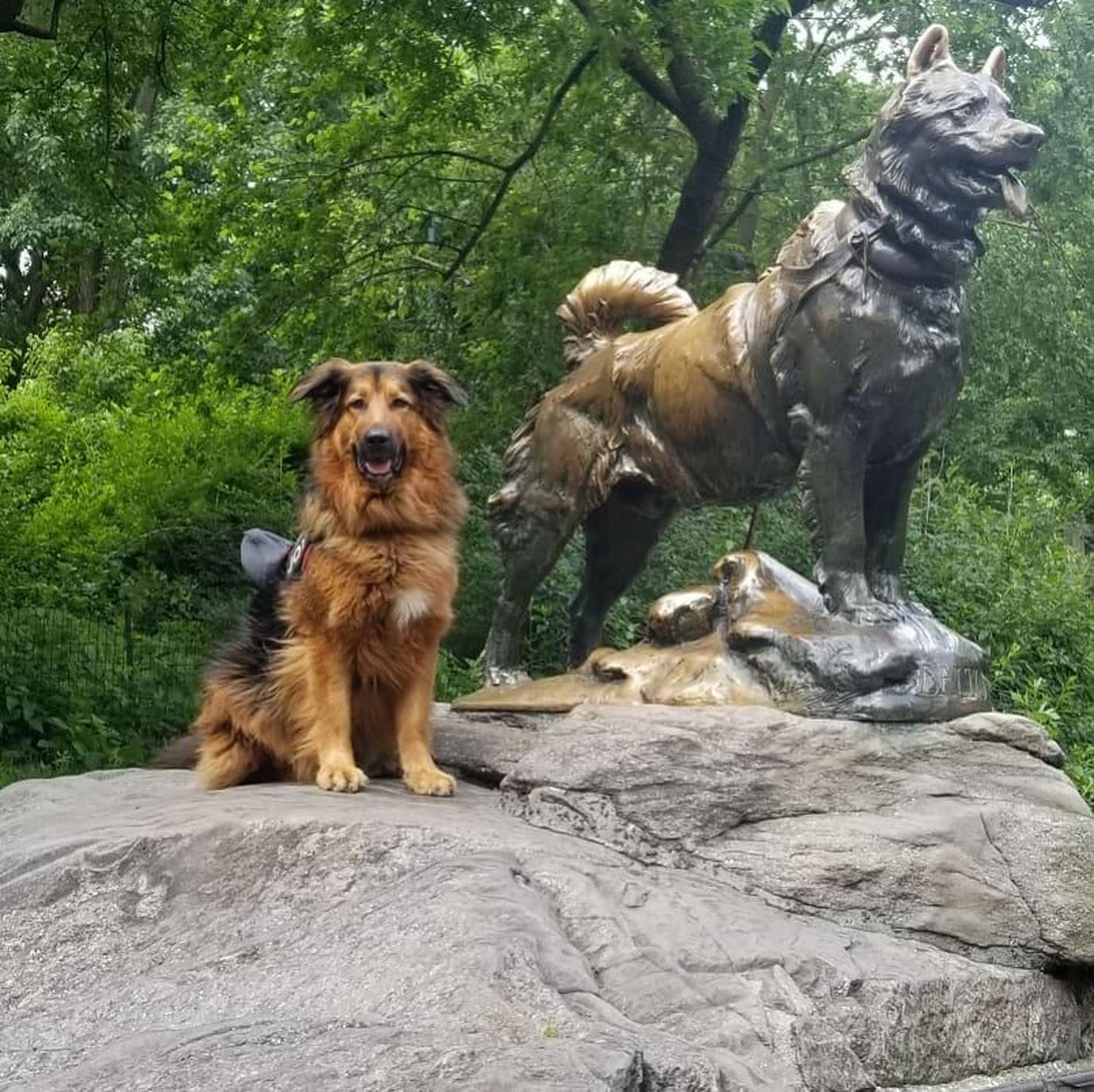 A dog poses next to a sculpture of Balto in Central Park.