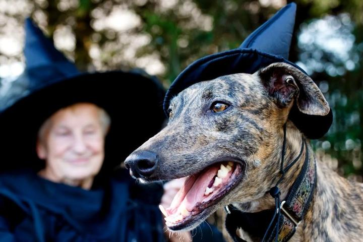 Petrify Your Pooch at America's Spookiest Cities