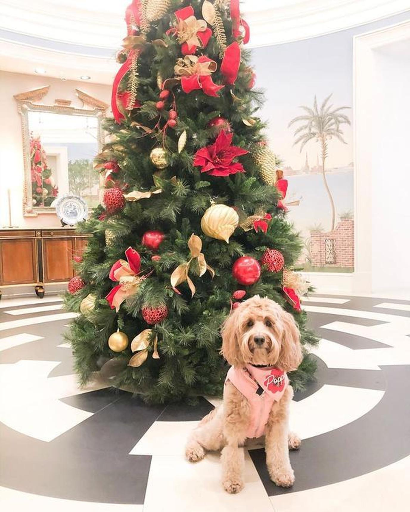 A dog and a christmas tree
