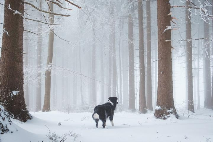 Winter Hikes for You and Your All-Weather Dog
