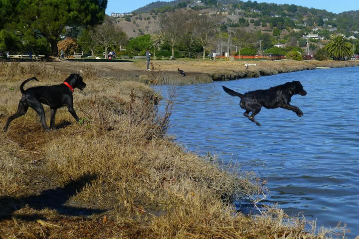 Pet Friendly Mill Valley Dog Park