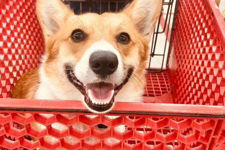Pet Friendly Tractor Supply Co.