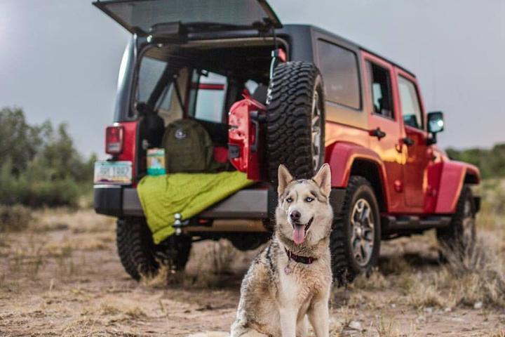 Pet Friendly MYE Jeep