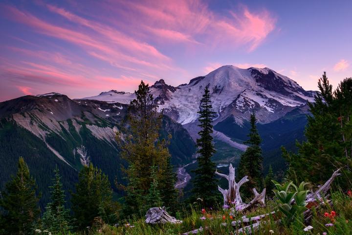 Pet Friendly Mount Rainier National Park