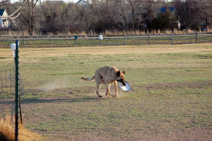 Pet Friendly Rover's Run Dog Park