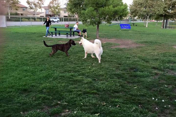 Pet Friendly Harada Heritage Dog Park