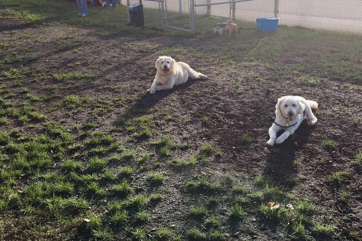 Pet Friendly Natasha & Nikita Weiss Dog Park