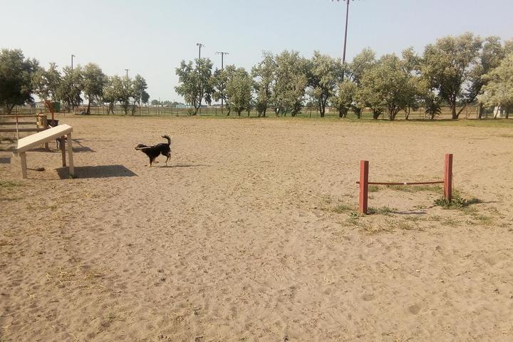 Pet Friendly Lee Field Dog Park