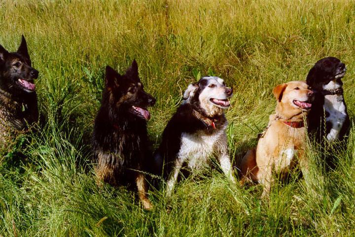 Pet Friendly Cesar Chavez Dog Park