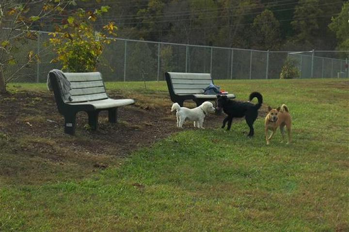 Pet Friendly Bark Park