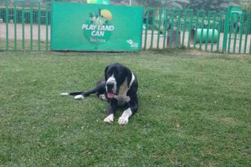 Pet Friendly Play Land Can - San Borja