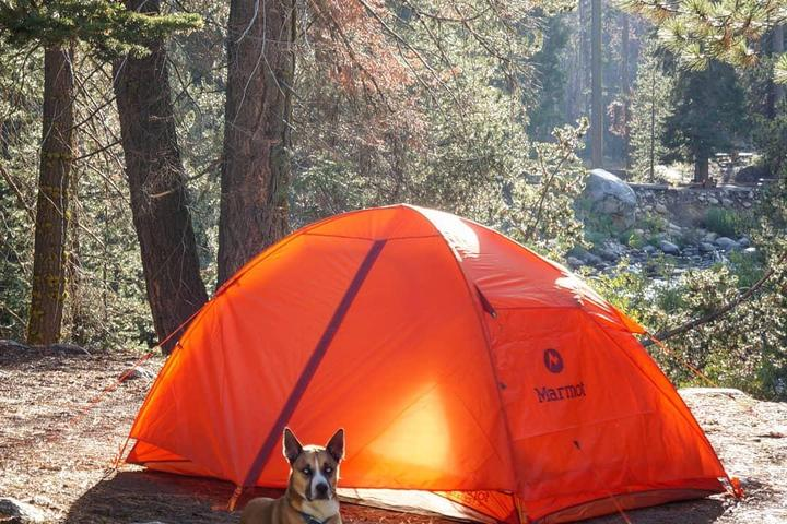 Pet Friendly Sequoia National Forest