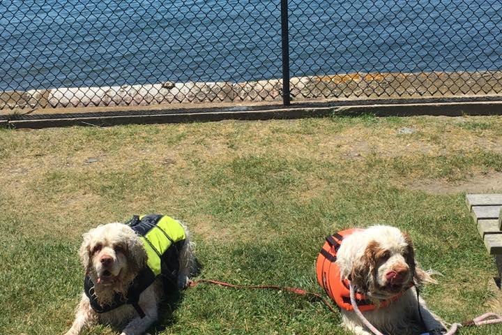 Pet Friendly Battery Park