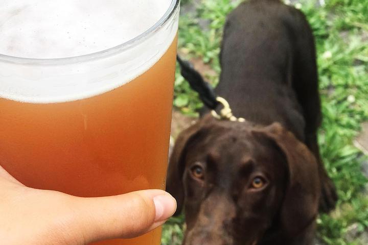 Pet Friendly Crown Brewing