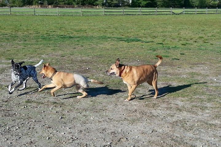 Pet Friendly Deep Creek Dog Park
