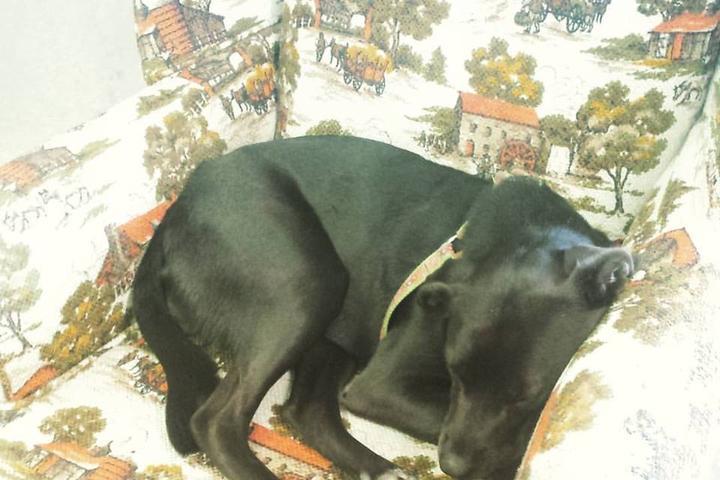 Pet Friendly J. Buynar Antique & Thrift