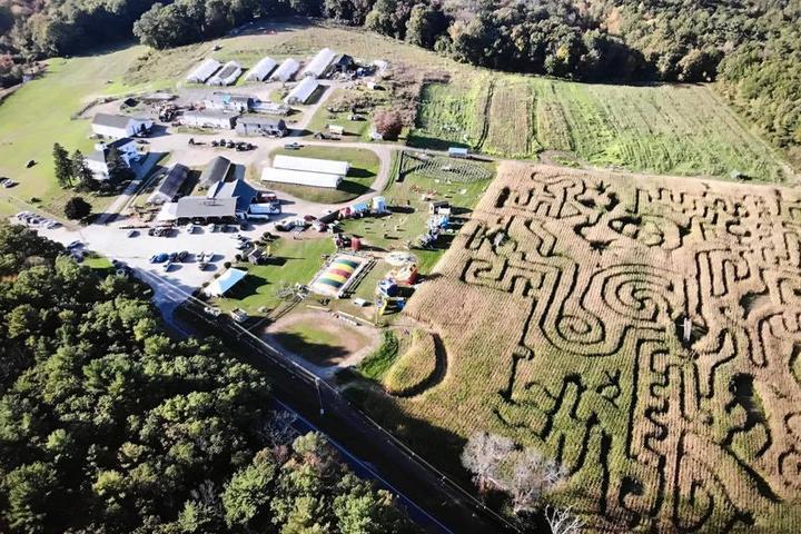 Pet Friendly Marini Farm Corn Maze