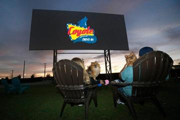 Pet Friendly Coyote Drive-In