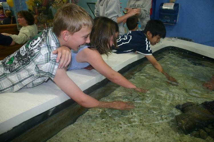Pet Friendly That Fish Place - That Pet Place