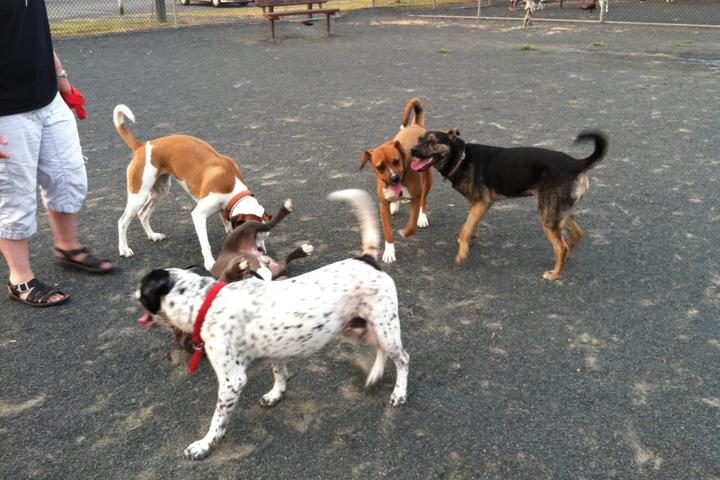 Pet Friendly East Brunswick Dog Park at Heavenly Farms Park