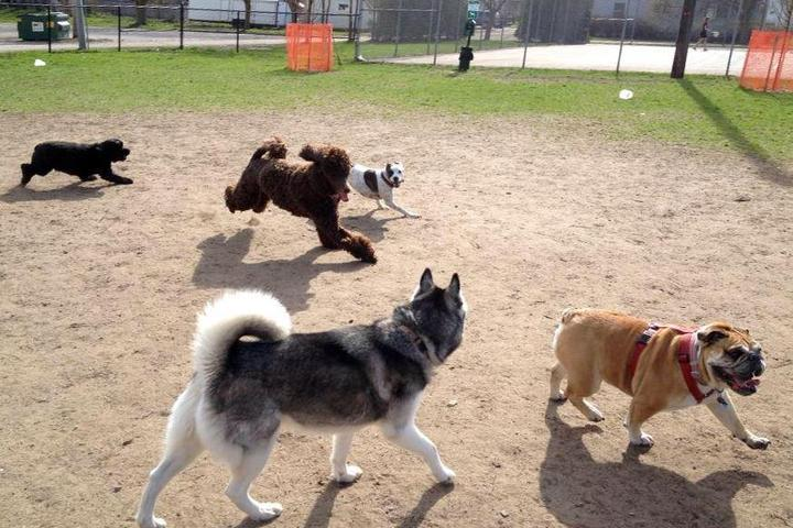 Pet Friendly Wags West Dog Park