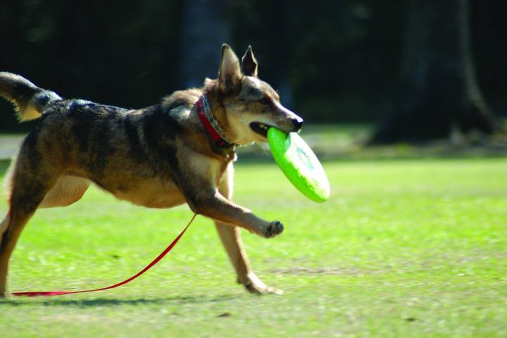 Pet Friendly Zachary Community Dog Park