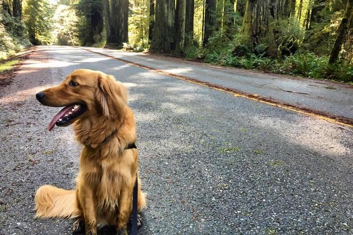 Pet Friendly Redwood National & State Parks