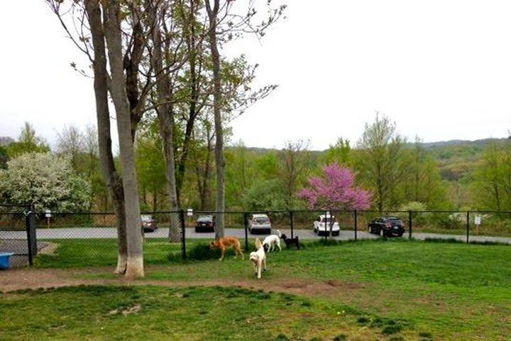 Pet Friendly Canine Commons at Beaver Dam Park