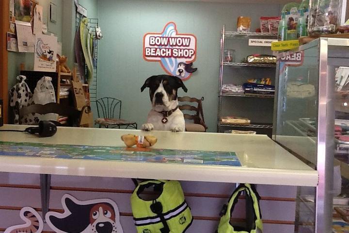 Pet Friendly Bow Wow Meow Beach Shop