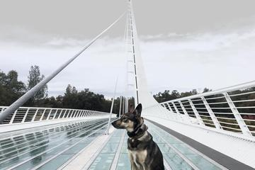 Pet Friendly Sundial Bridge