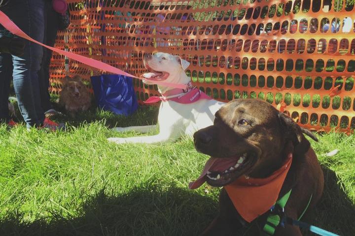 Pet Friendly Hawthorne Dog Park