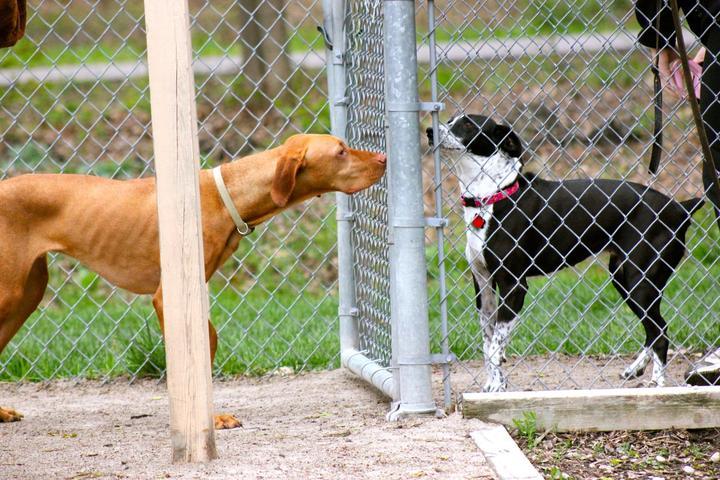 Pet Friendly Clinton Township Dog Park