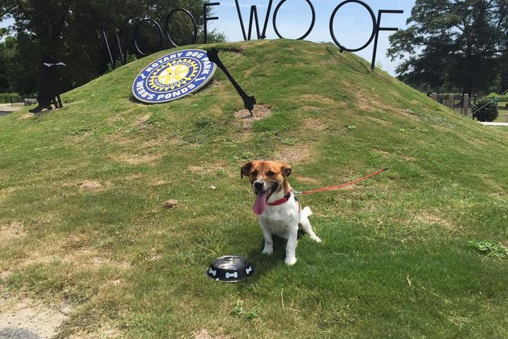 Pet Friendly Rotary Dog Park