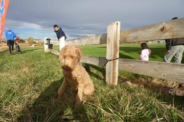 Pet Friendly Hound Hill Dog Park at Heritage Regional Park