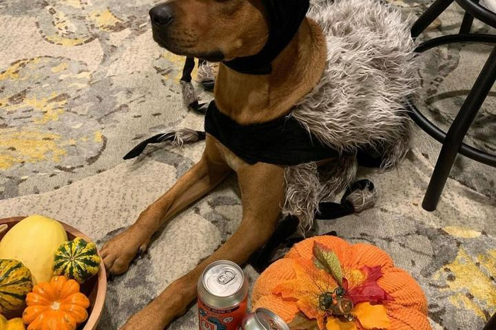 Pet Friendly Crooked Crab Brewing Company