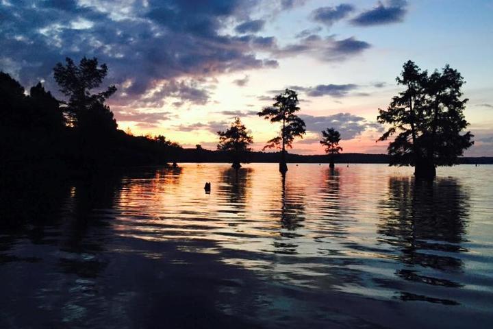 Pet Friendly Lake D'Arbonne State Park