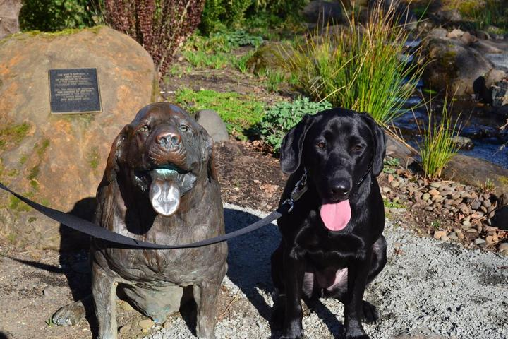 Pet Friendly Oregon Garden