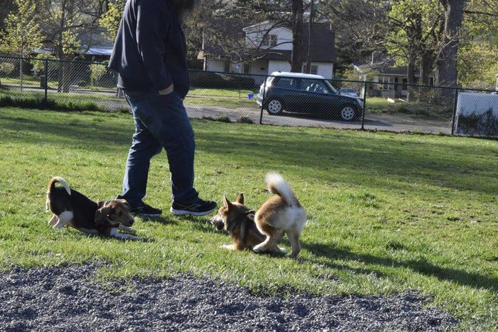 Pet Friendly Connell Dog Park