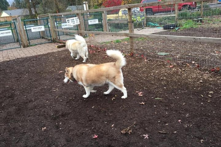 Pet Friendly Newberg Dog Park