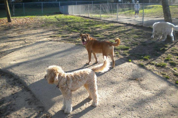 Pet Friendly Commodore Dog Park