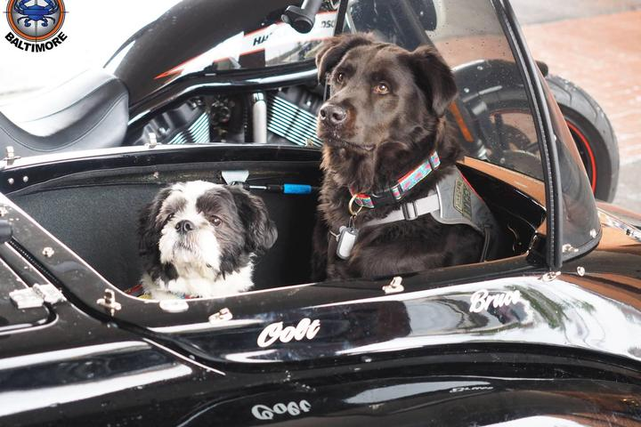 Pet Friendly Harley Davidson Store